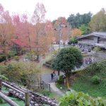 【南区】油山市民の森に紅葉を見に行ってきた