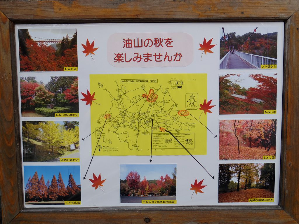 油山 秋の紅葉