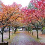 【糟屋郡】呑山観音寺の紅葉を見に行ってきた