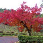 【糟屋郡】四王寺県民の森(福岡県民の森センター)の紅葉を見に行ってきた