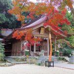 【太宰府市】竈門(かまど)神社の紅葉、駐車場、ライトアップ情報はこちら