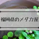 福岡県のメダカ屋さん