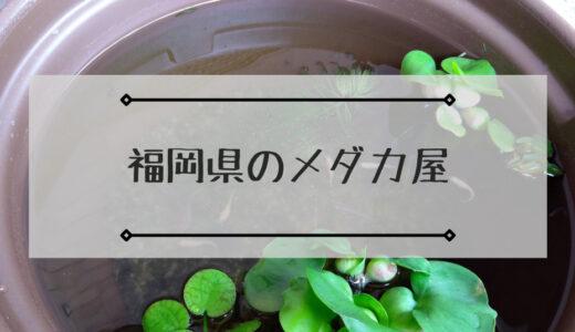 福岡県のメダカ屋で店頭・ネット販売をしているメダカショップまとめ