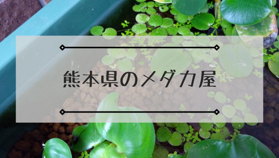 熊本県のメダカ屋